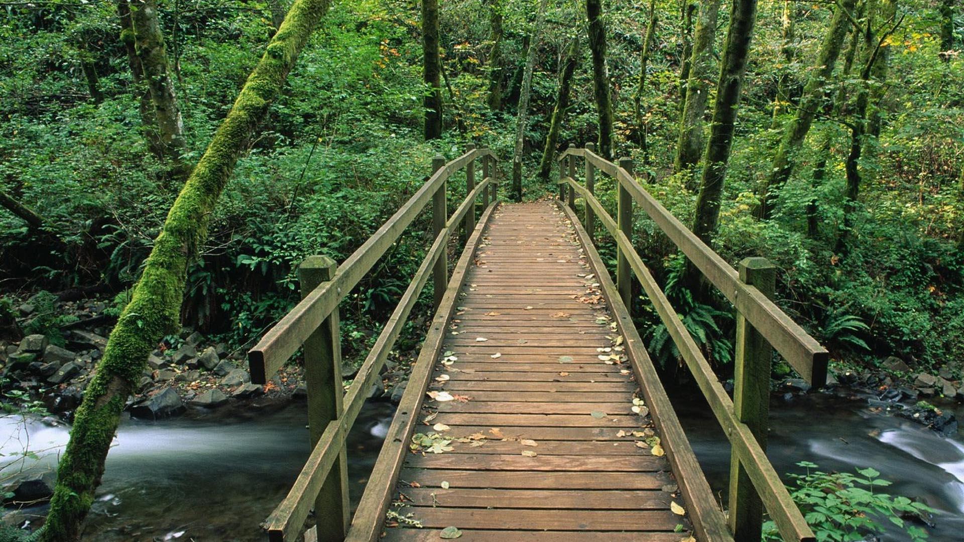 мосты деревянные фото