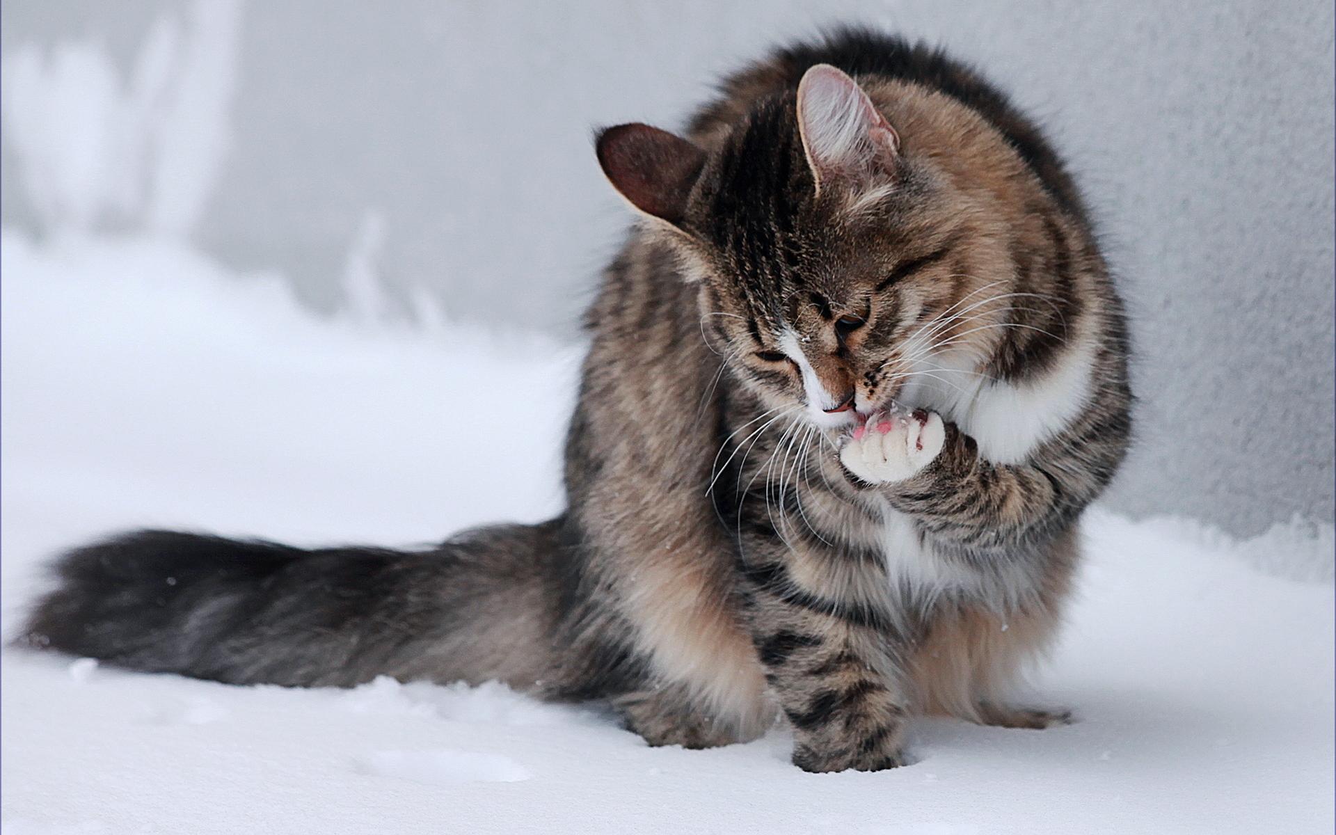 Корм для котят премиум-класса: сухой или влажный? Какой