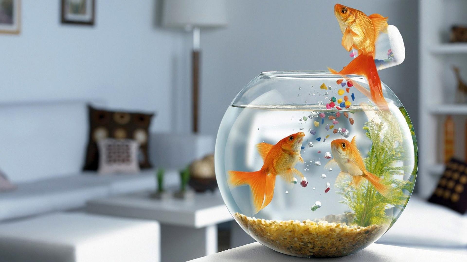 обои для рабочего стола животные на воде