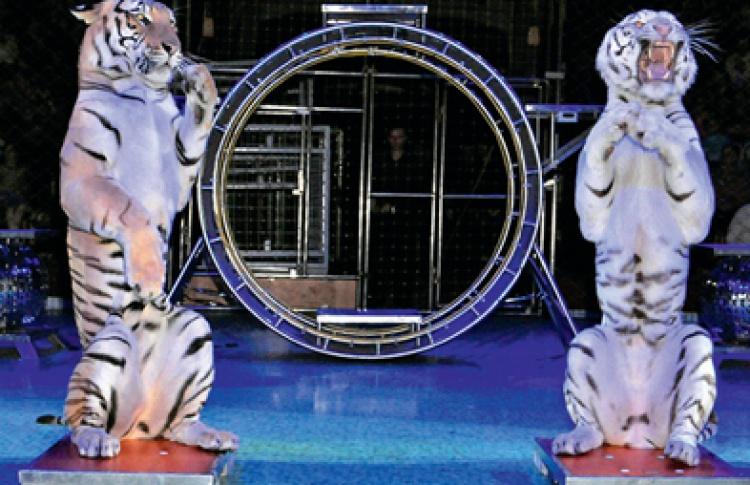 Звездные цирки мира