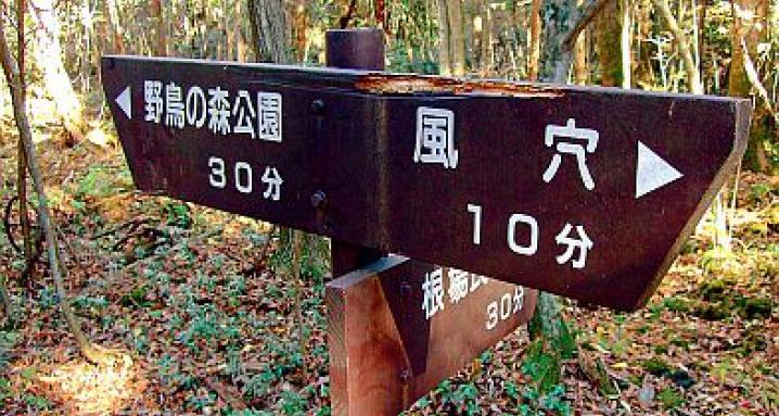 Леса Японии - идеальное место для самоубийц