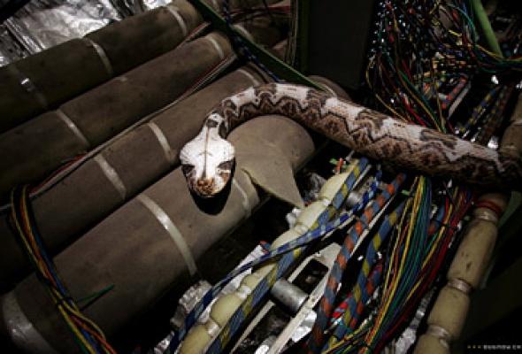 Змеиный полет - Фото №1