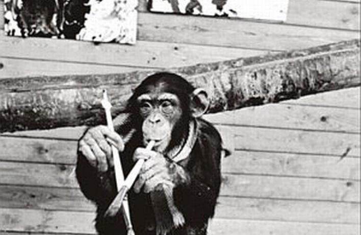 Рисунки приматов: истоки творчества или игра природы?