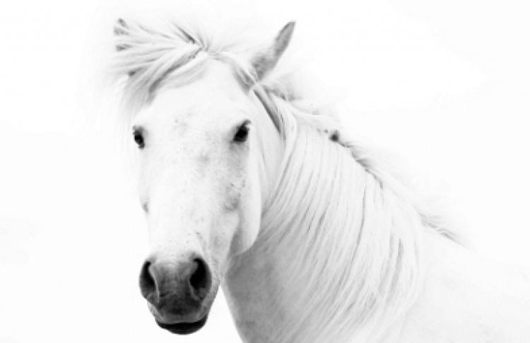 """Ксения Орлова """"Исландские лошади. Впечатления..."""""""