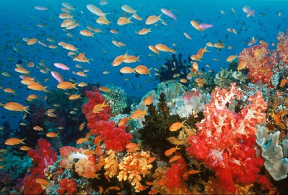Большое путешествие вглубь океанов 3D: Возвращение - Фото №0