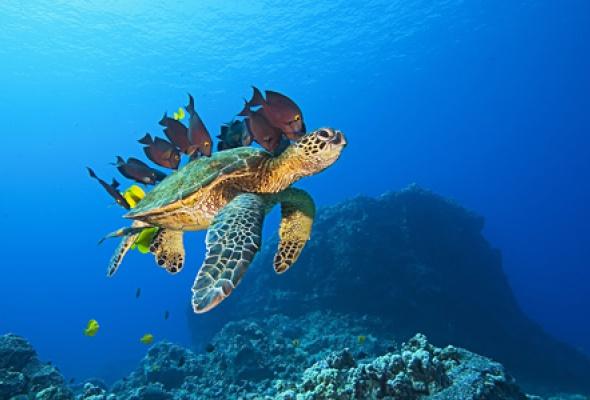 Большое путешествие вглубь океанов 3D: Возвращение - Фото №1