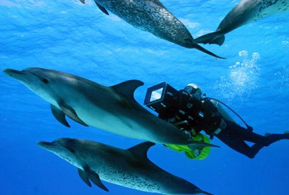 Большое путешествие вглубь океанов 3D: Возвращение - Фото №2
