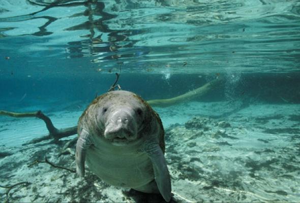 Большое путешествие вглубь океанов 3D: Возвращение - Фото №3