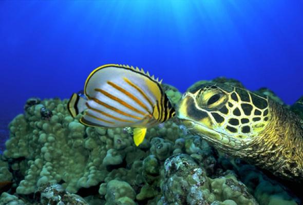 Большое путешествие вглубь океанов 3D: Возвращение - Фото №4