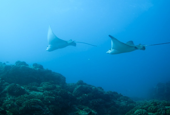 Большое путешествие вглубь океанов 3D: Возвращение - Фото №5