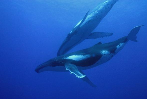 Большое путешествие вглубь океанов 3D: Возвращение - Фото №8