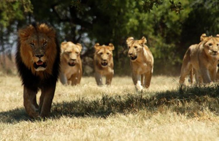 Документальные фильмы про животных теснят блокбастеры