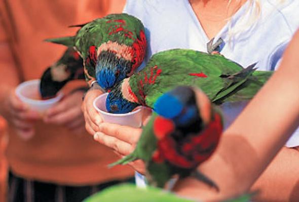 Парк птиц - Фото №0