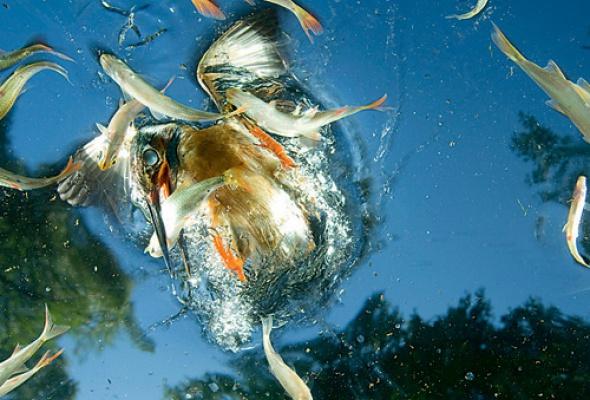 НаWorld Press Photo 2010 покажут 200 лучших фотографий планеты заистекший год. - Фото №3