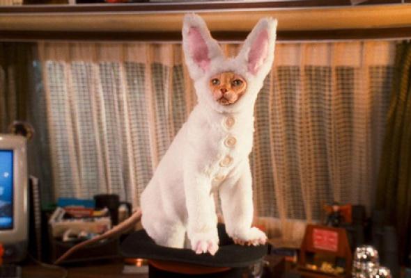 Кошки против собак: Месть Китти Галор - Фото №4