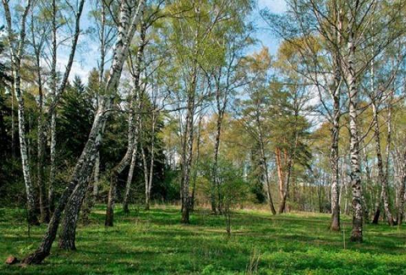 Битцевский парк - Фото №0