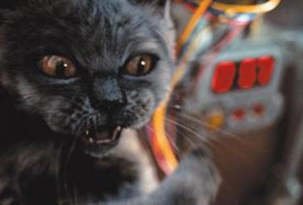 Кошки против собак - Фото №1