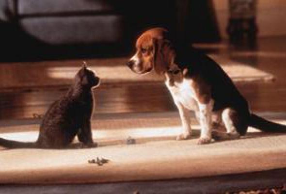 Кошки против собак - Фото №6