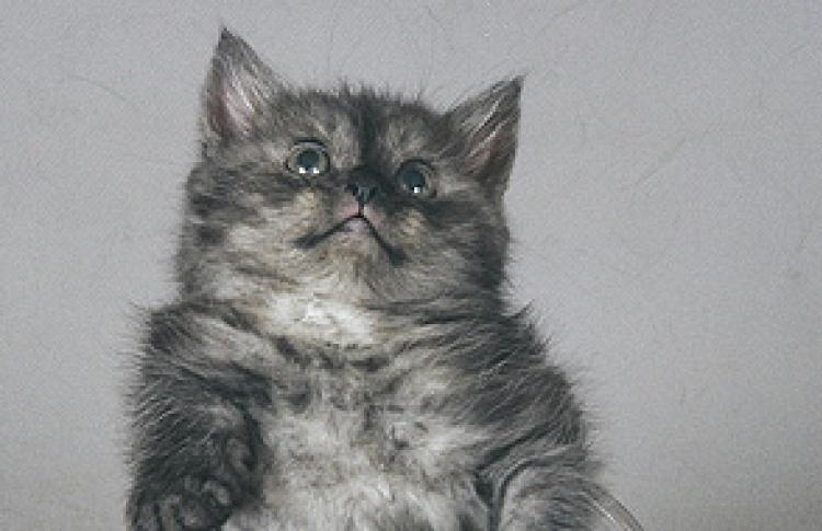 Кошка - это кошка