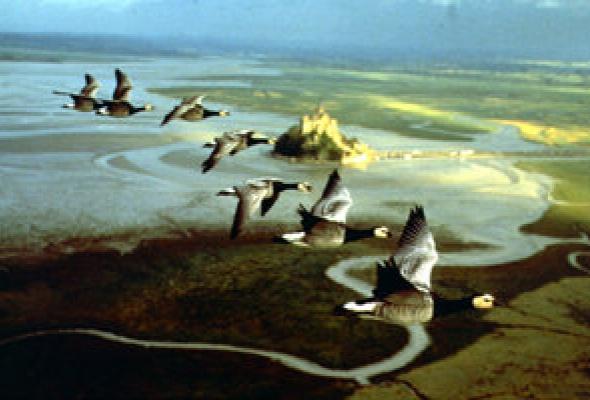 Птицы - Фото №23