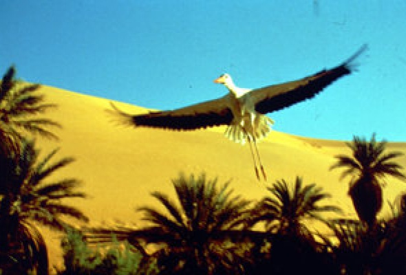 Птицы - Фото №19