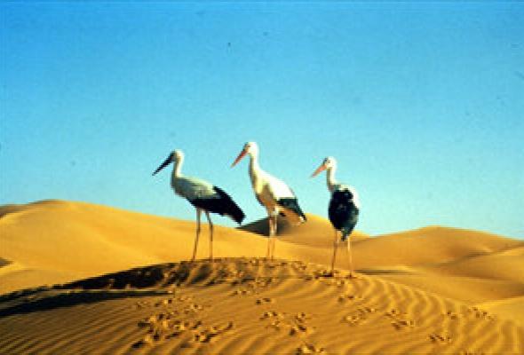 Птицы - Фото №12