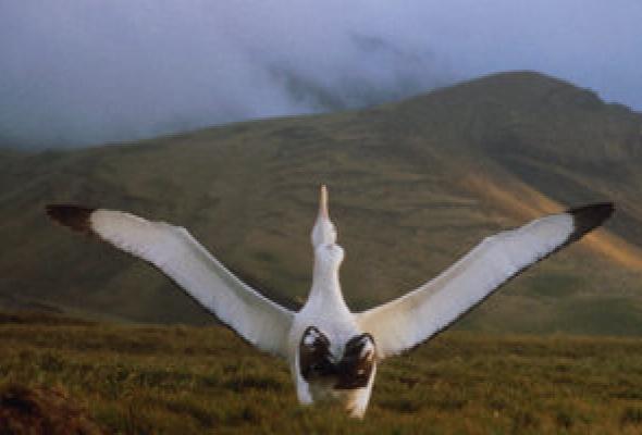Птицы - Фото №17