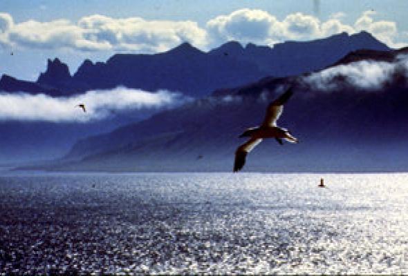 Птицы - Фото №10