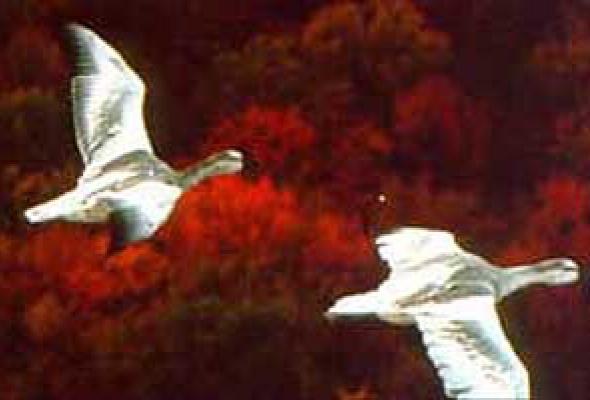 Птицы - Фото №22