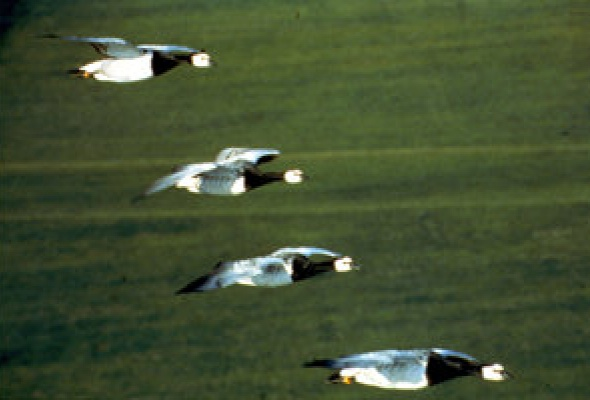 Птицы - Фото №14