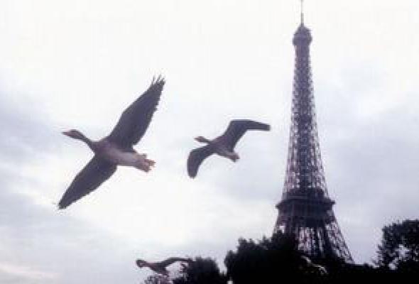 Птицы - Фото №8