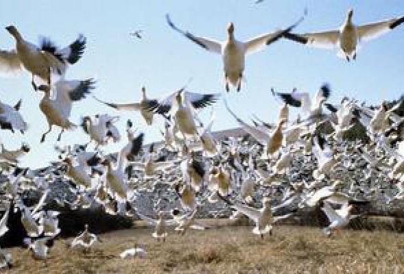 Птицы - Фото №9