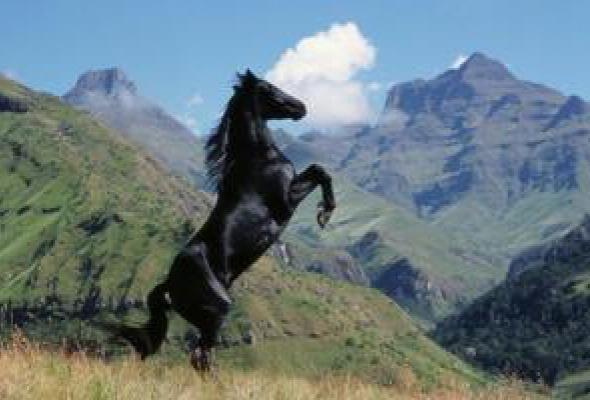 Приключения Черного скакуна - Фото №6