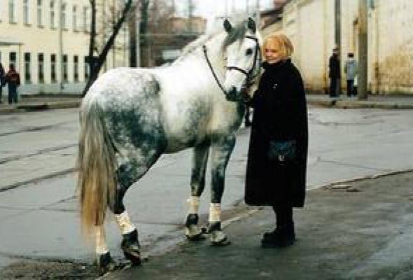 Год лошади - созвездие Скорпиона - Фото №13