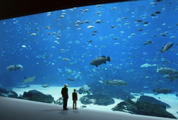 Океаны - Фото №0