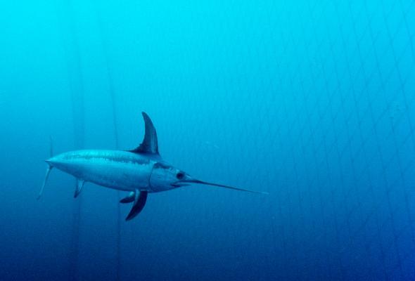 Океаны - Фото №3