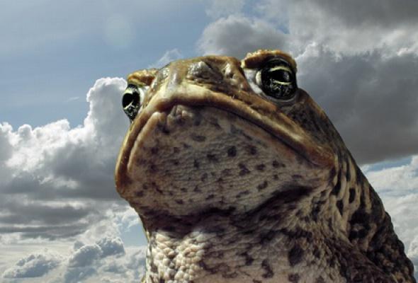 Тростниковые жабы: Оккупация 3D - Фото №0