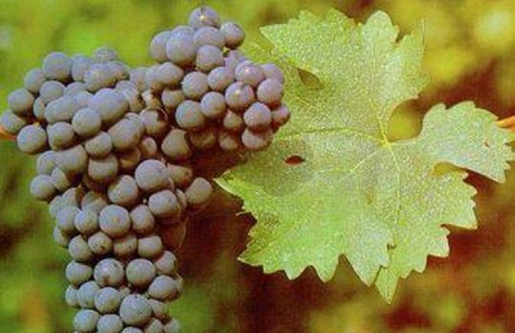 Дегустация чилийских вин «Santa Digna»