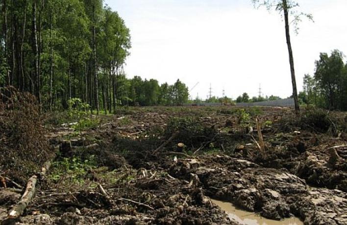 Химкинский лес могут оставить впокое