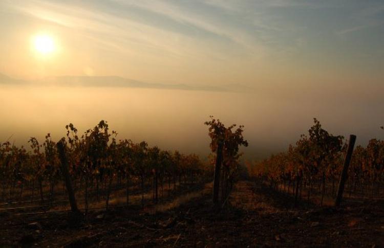 Фестиваль чилийских вин