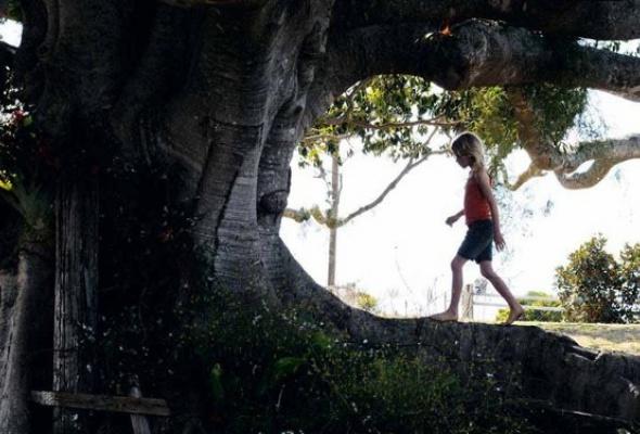 Дерево - Фото №2