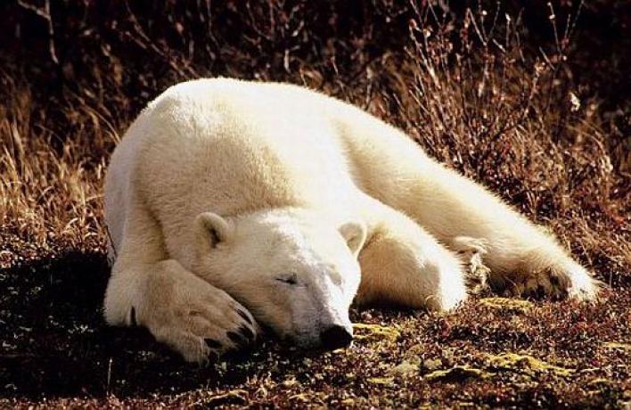 Взоопарке обстреляли медведя, раны досих пор кровоточат
