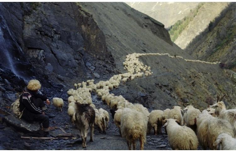 "Дмитрий Гомберг ""Путь пастуха"""