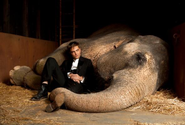 Воды слонам - Фото №6