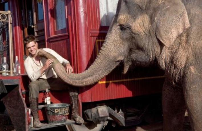 Роберт Паттинсон: «Попал под обаяние одной слонихи»