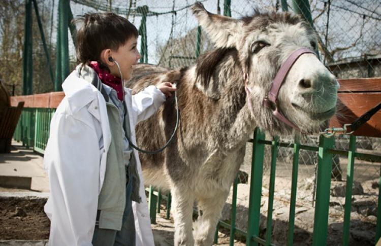 День зайцев и День Айболита в Зоопарке
