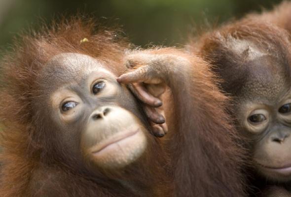 Борнео: остров сокровищ - Фото №2