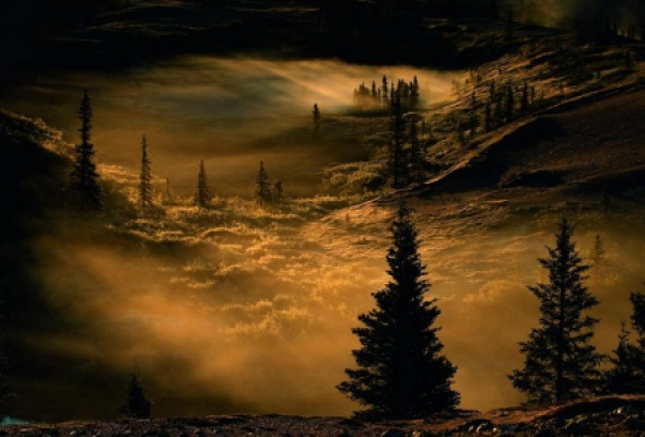 О лесах и людях - Фото №2