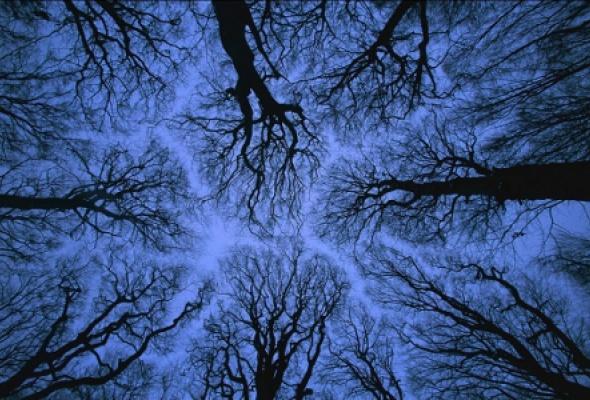 О лесах и людях - Фото №3
