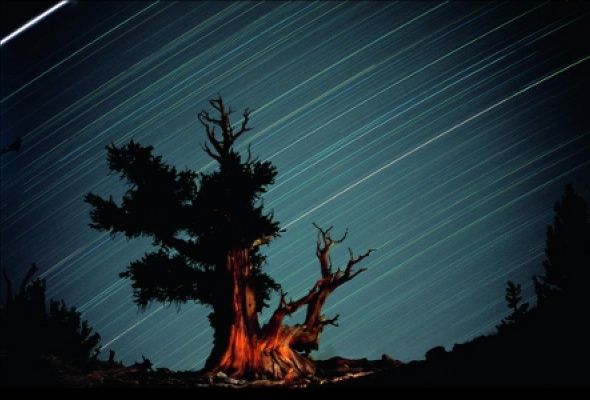 О лесах и людях - Фото №5